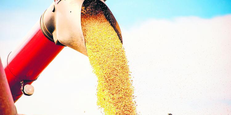 Disputa entre EUA e China deve ter efeitos negativos no agro brasileiro